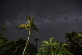 The Milky Way Above Tropical Trees and Foliage of the Atlantic Rainforest, at Night Photographic Print by Alex Saberi