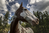 Close Up Portrait of a Horse Photographic Print by Ami Vitale