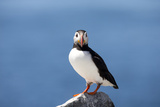 Portrait of an Atlantic Puffin, Fratercula Arctica Photographic Print by Robbie George