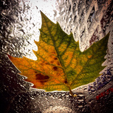 A Colorful Leaf That Has Fallen on a Car Windshield Photographic Print by Sean Gallagher