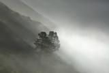Fog Enshrouds the Coastal Cliffs of Big Sur Photographic Print by Paul Colangelo