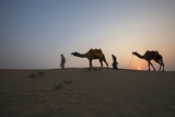 Men Lead Camels over Sand Dunes at the Edge of the Thar Desert, Famous for Camel Rides Lámina fotográfica por Macduff Everton