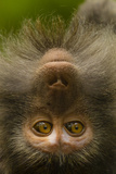 Close Up Portrait of a Long-Tailed or Crab-Eating Macaque, Macaca Fascicularis Photographic Print by Ralph Lee Hopkins
