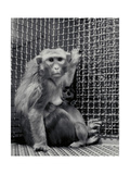 Animal research Photographic Print by  Science Source