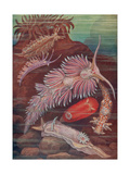 Marine Invertebrates, Sea Slugs Giclee Print by  Science Source