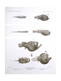 Deep Sea Fishes Giclee Print by  Science Source