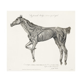 Musculature, Horse, Illustration, 1772 Giclee Print by  Science Source