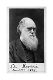 Charles Robert Darwin, English Naturalist Giclee Print by  Science Source