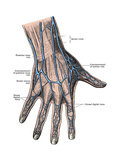 Dorsum of the Hand and Fingers Art by  Science Source