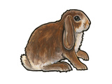 Dwarf Lop 2 Posters by Sally Pattrick