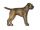 Border Terrier Print by Sally Pattrick