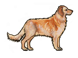 Golden Retriever Posters by Sally Pattrick
