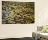 Lily Pads Growing on the Surface of a Pond Vægplakat af Kelley Miller