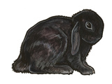 Dwarf Lop Posters by Sally Pattrick