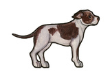 Staffordshire Bull Terrier 2 Poster by Sally Pattrick