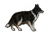 Border Collie 2 Poster by Sally Pattrick