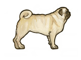 Pug Prints by Sally Pattrick