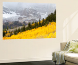 Aspen Trees Emit a Fiery Glow in Front of Snow-Covered Mountains Vægplakat af Robbie George