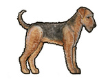 Airedale Prints by Sally Pattrick