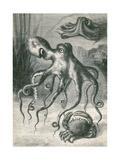 Octopi and Crab, 1833 Gicléedruk van  Science Source