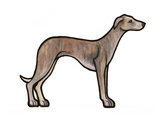 Whippet Prints by Sally Pattrick