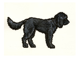 Labradoodle Black Prints by Sally Pattrick