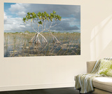 Red Mangrove Trees Stand over Sawgrass and Needle Rush Vægplakat af Carlton Ward