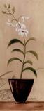 Asian Orchid I 高品質プリント : ジェニファー・マルタ