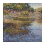 Sunlit Pond 1 Giclee Print by  Sarback