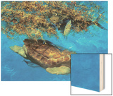 Loggerhead and Dolphins in Sargassum Sea, 2000 Wood Print by Stanley Meltzoff