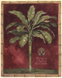Caribbean Palm II With Bamboo Border Posters by Betty Whiteaker