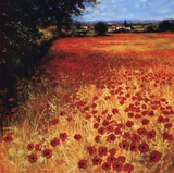 Field Of Red And Gold Print by Steve Thoms