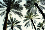 Palm One Prints by Carla West