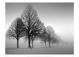 Winter Trees III Prints by Ilona Wellmann