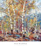 Birch Colors 1 Print by Dean Bradshaw
