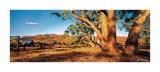 Ken Duncan - Flinders Ranges Obrazy