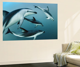 Dusky Dolphins Off Patagonia Communicate to Herd Anchovies into Balls Wall Mural by Brian J. Skerry