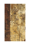 Sundew I Prints by Carol Black