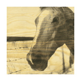 Portrait of a Horse Print by Casey Mckee
