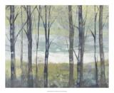 Jennifer Goldberger - Pastel Birches II - Poster