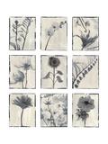 Silk Botanicals Poster by Liz Jardine