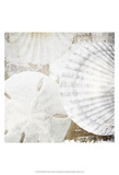 White Shells II Prints by Irena Orlov