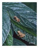 Spring Peepers II Prints by Fred Szatkowski