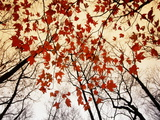 Bäume mit kahlen Zweigen und roten Ahornblättern, die entlang der Landstraße wachsen Kunst von Raymond Egehman