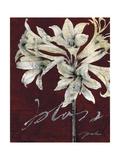 Cabernet Blossoms II Prints by Liz Jardine