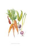 Harvest Medley IV Prints by Chariklia Zarris