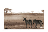 Crossing the African Plains Prints by Jorge Llovet