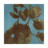Eucalyptus II Prints by Julianne Marcoux