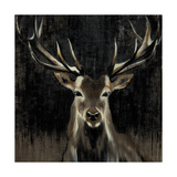 Young Buck Art by Liz Jardine