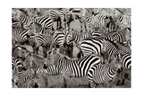 Zebra Abstraction Prints by Jorge Llovet